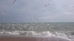 Mess of seagulls above the sea Stock Footage