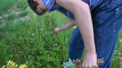 Boy teenager collects ripe wild strawberry. Stock Footage