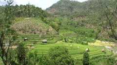 Rice terraces on the way to Amed Stock Footage