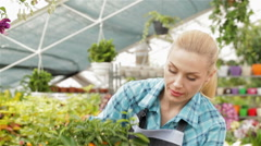 Female florist looking at mandarin fruits at the garden centre - stock footage