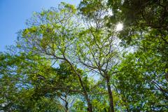 Tree canopy of a tropical rain forest Stock Photos