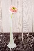 Pink Gerbera Daisy In Vase - stock photo