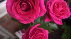 Rose petals with dew drops closeup Stock Footage
