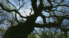 Twisted tree - stock footage