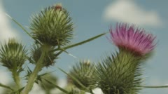 Bee Pollinating Stock Footage