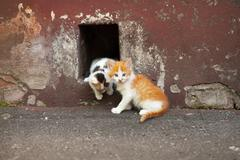 Two kittens is getting out through a hole in the painted concrete ragged wall Stock Photos