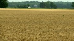 Wheat with grain bin in background in Kansas Stock Footage