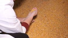 Farmer with corn grain in the barn  Stock Footage