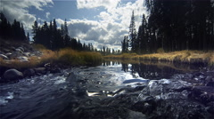 Stream and forest, Yellowstone NP, WY Stock Footage