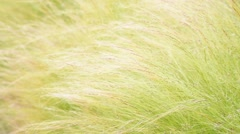 Warm tone color, the movement of weed grass in summer Stock Footage