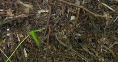 Anthill on nature in forest Stock Footage