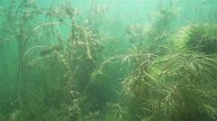 Sunbeams penetrate underwater spectacular and beautiful illuminated algae Stock Footage