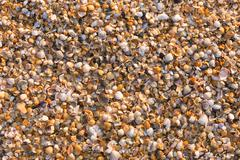 Background from small multi-colored sea shells Stock Photos