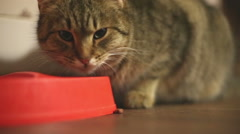 Tabby cat eating food from a red bowl. Hungry cat eating feed. Stock Footage