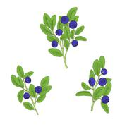 Set blueberry twigs with berries Stock Illustration