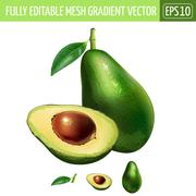 Avocado on white background. Vector illustration - stock illustration