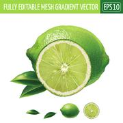 Lime on white background. Vector illustration Stock Illustration