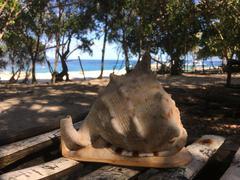 Big shell at Balicasag Island Stock Photos