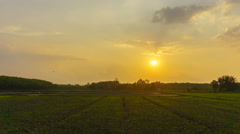 4K/UHD Day to Night Time-lapse : Sunset over agricultural green field. Stock Footage