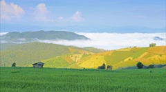 "Rice field on the mountain. ""Pah Pong Piang"" Thailand - stock footage"