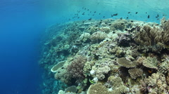 Coral Reef Drop Off in Wakatobi Stock Footage