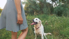 Young woman stroking retriever dog in park during sunset Stock Footage