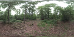 360 VR In the green forest with dry logs Stock Footage