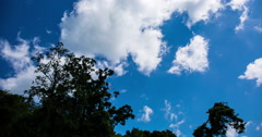 Time Lapse of Clouds forming over trees Stock Footage
