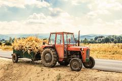 Tractor laden with dry stalks of corn - stock photo