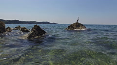 4K. Wild bird Great Cormorant sitting on a rock in the sea near old city Piran. Stock Footage