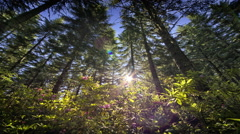 Sun moving across sky back lighting forest and wildflowers Stock Footage