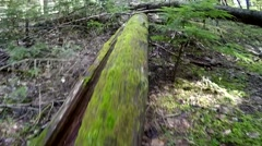 Pan Up from Mossy Log Stock Footage