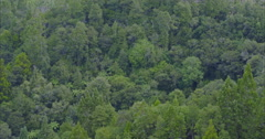 Aerial flying over native forest in northland, new zealand Stock Footage