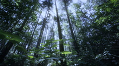 Forest and broad leaf pants, Washington - stock footage