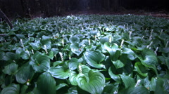 Ground Cover in forest, Cape Blanco State Park OR Stock Footage
