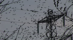 Birds fly in thousands onto a wire and pylon Stock Footage