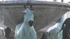 Horse Fountain, Scottsdale, Arizona Stock Footage