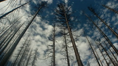 Burnt forest with clouds, California Stock Footage