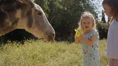 Two children stroking and playing with donkey Stock Footage