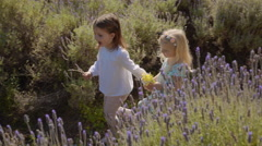 Two children walking through lavender flowers Stock Footage