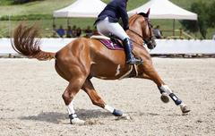 Horseman on its steed at equestrian show - stock photo