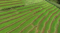 Paddy field in northern Thailand Stock Footage