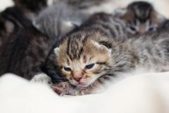Small children gray-brown kittens Stock Photos