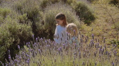 Two children walking through lavender flowers Stock Footage