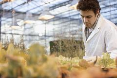 Middle Eastern scientist working in greenhouse Stock Photos