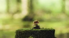 Mushroom growing on mossy tree stump Stock Footage