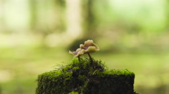 Mushrooms growing on tree stump Stock Footage