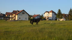 Black Stallion is Grazing in a Field Stock Footage