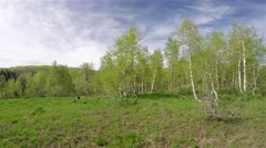 Mountain meadow high in the mountains of Utah Stock Footage