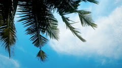 Green palm leaves against blue sky, relaxing day on beach, summer vacation Stock Footage